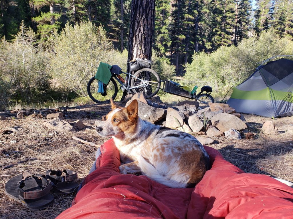 At camp while bikepacking with a dog